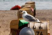 Seagull sitting on the parapet in front of  beach — Stock Photo
