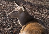 The deer in forest in sunlight — Stock Photo