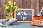 Pizarra en una tabla de la planta con el texto consejos de jardinería — Foto de Stock