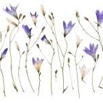 Pressed wild flowers — Stock Photo #56045691