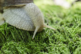 Snail on forest moss — Stock Photo