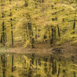 Trees reflection in a forest lake during autumn time — Stock Photo #62010085