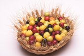 Cherry plums in a wooden basket — Stock Photo