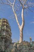 Archeologisch park angkor — Stockfoto