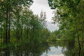 Lac de la forêt — Photo