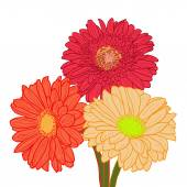 Bouquet of three colorful gerberas. Hand drawn illustration. — Stock Vector