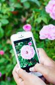 Smartphone in hand taking photo — Stock Photo