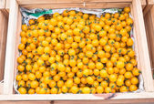 Yellow tomatoes — Stock Photo
