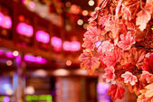 Red leaves indoors with blured colorfull background — ストック写真
