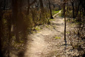 Shaded path in the woods — Foto de Stock