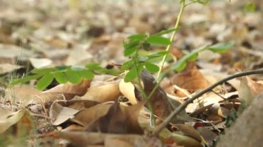 Withered leaves — Stock Video