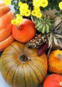 Mix of beautiful vivid terrace fall flowers and pumpkin  — Stock Photo