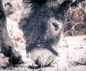 Donkey looking for food.  — Stockfoto