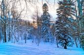 Winter mountain landscape — Stock Photo
