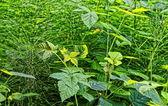 зеленый фон травы — Стоковое фото