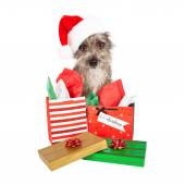 Terrier Santa Dog With Presents — Stockfoto