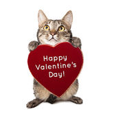 Cat With Valentines Day Heart — Stock Photo