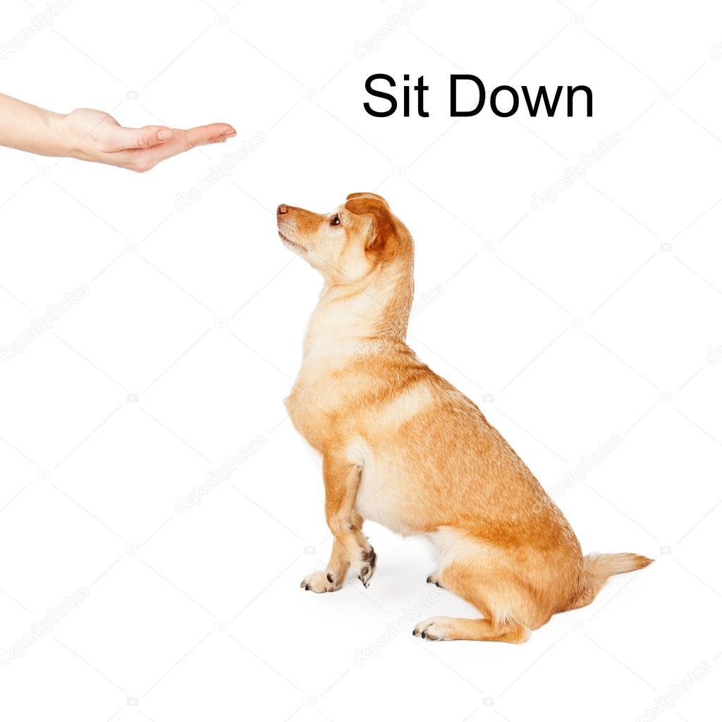 Dog Training Sit Command
