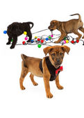 Puppies Playing With Christmas Bulbs — Stock Photo