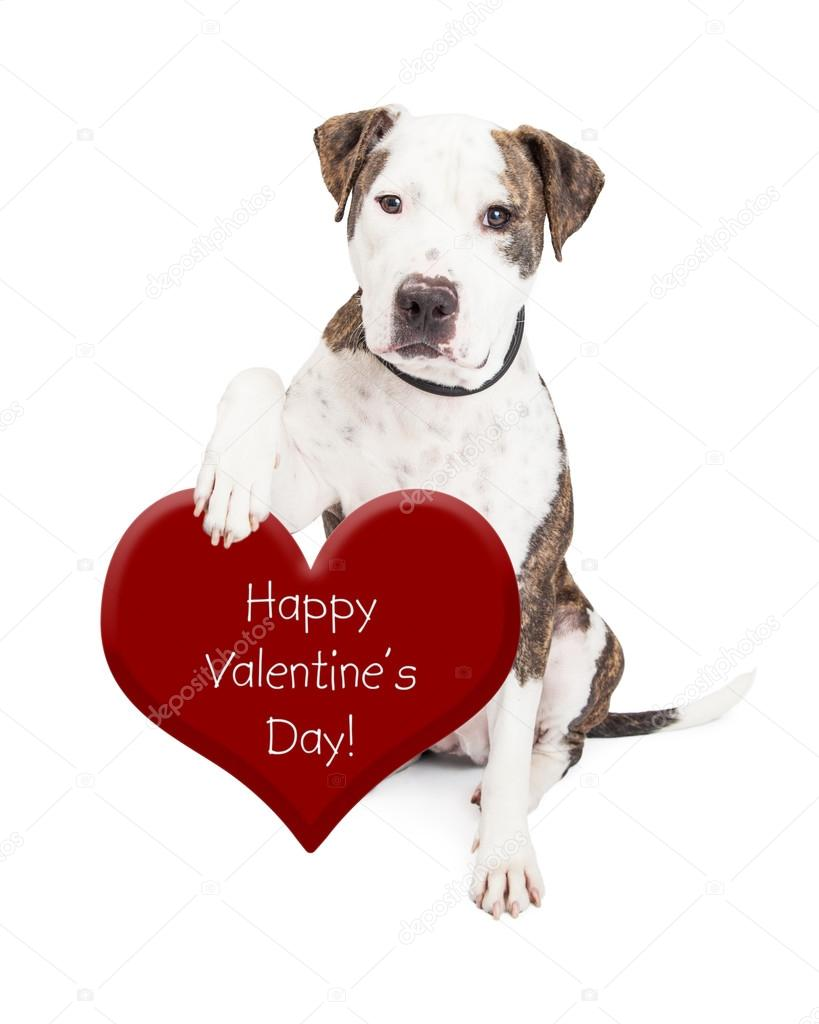 Happy Valentines Day Dog Pictures