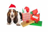 Усталая такса Санта с подарками — Стоковое фото