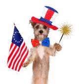 Fourth of July Celebration Dog — Stock Photo