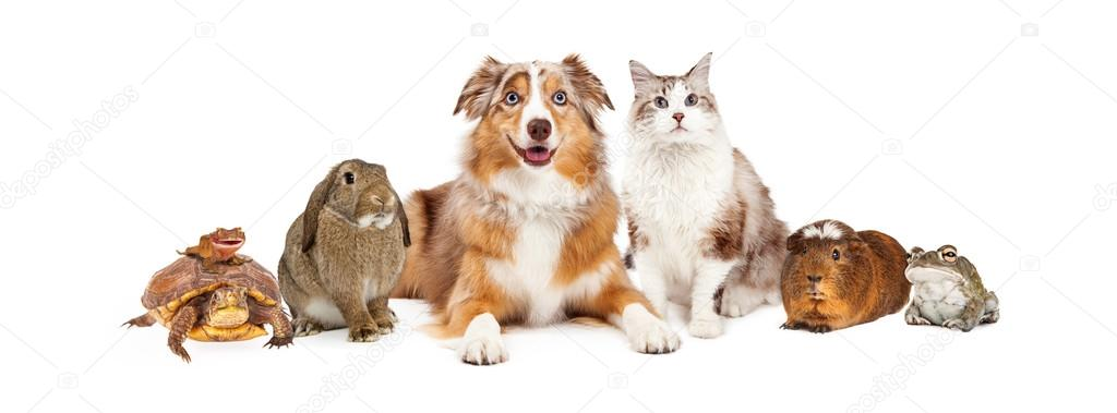 National Dog Show Day Of Cats