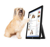 Dog Using Social Media — Stock fotografie