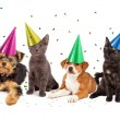 Puppies and Kittens With Confetti — Stock Photo #67285067
