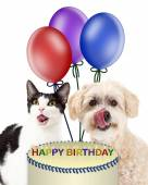 Birthday dog and cat licking muzzles — Stock Photo