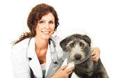 Female veterinarian and dog — Stock Photo
