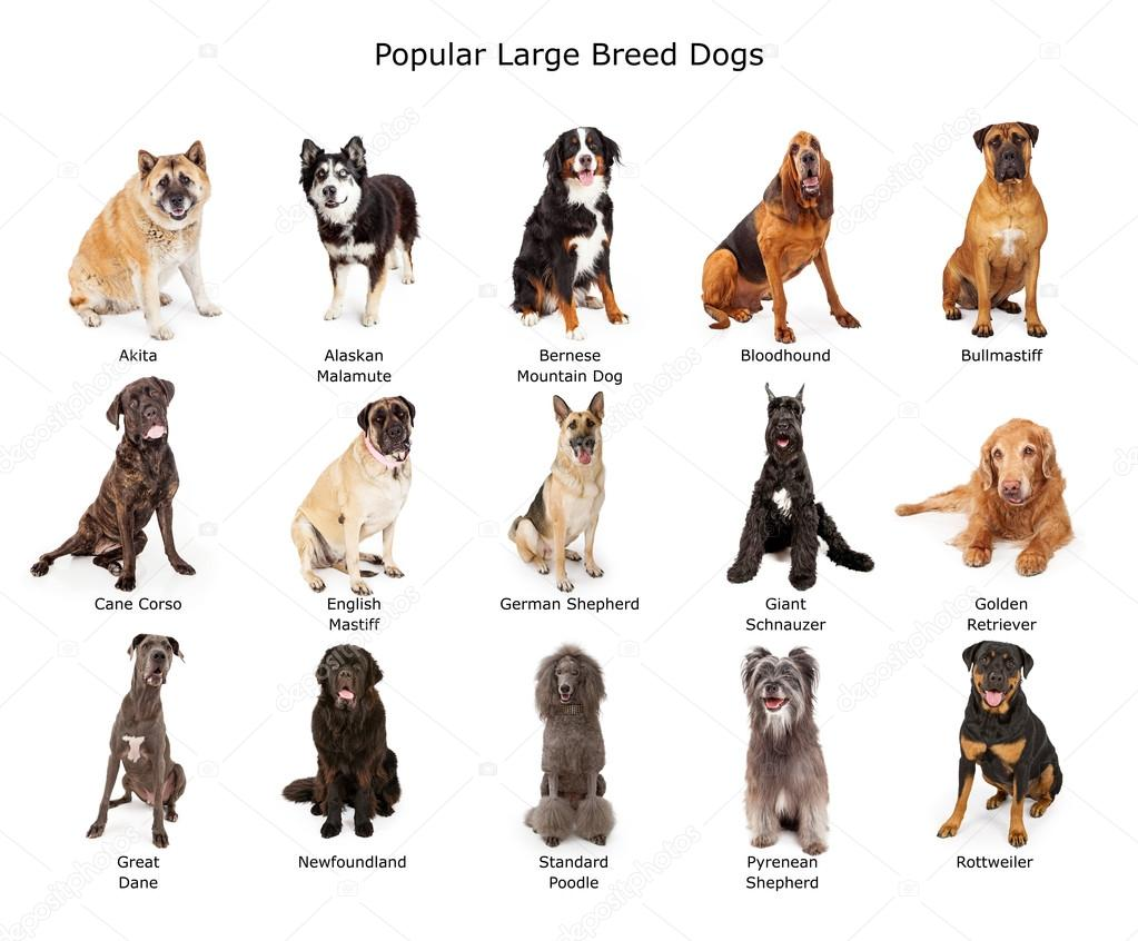 Top Large Breed Dog Names