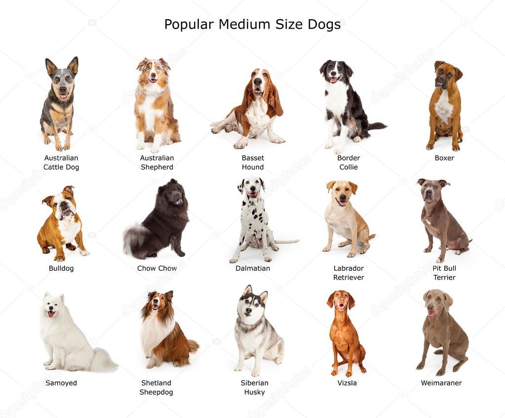 Все названия собак и фото