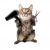 Saç kurutma makinesi ve kesme makası tutan kedi — Stok fotoğraf