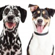 Dogs of different breeds — Stock Photo #82289300