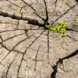 Leadership success and hope concept.Strong seed growing on old c — Stock Photo #54121711