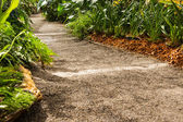 Landscaping in the garden. The path in the garden. — Stock Photo