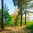 Evergreens on the lakeside beautiful landscape — Stock Photo #51819419