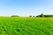 Beautiful Russian field and cloudless sky — Stock Photo