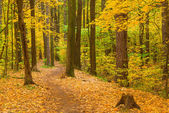 Walk along the path in the autumn forest — Stock Photo