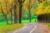 Bicycle path in an empty yellow autumn park — Stock Photo