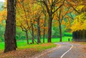 Empty jogging track in the autumn park — Stock Photo