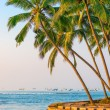 Lush coconut palms on the shore of the Indian Ocean — Stock Photo #62897855