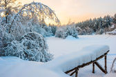 Morning shot of winter snow-covered forest — Stock Photo