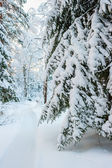 Lane among the trees in a snowy winter forest — Stock Photo