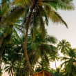 Wooden bungalow among tropical coconut palms — Stock Photo #63334345
