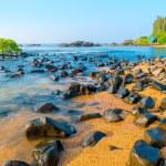 Tree growing in sea water in the rocks — Stock Photo #63334439