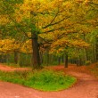 Empty path in autumn forest at dawn — Stock Photo #65022515