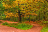 Empty path in autumn forest at dawn — Stock Photo