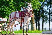 White horse harnessed, stands on the sunny street — Stock Photo